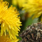 Dandelion Root Benefits And Dandelion Leaf Benefits