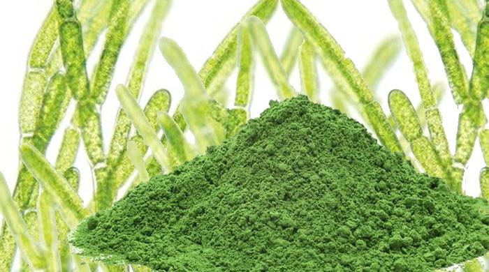 Chlorella Is A Nutrient Rich Detoxifying Whole Food Algae