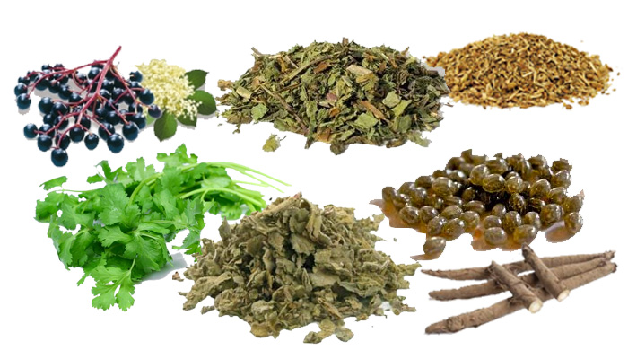 Top 7 Natural Detox Herbs
