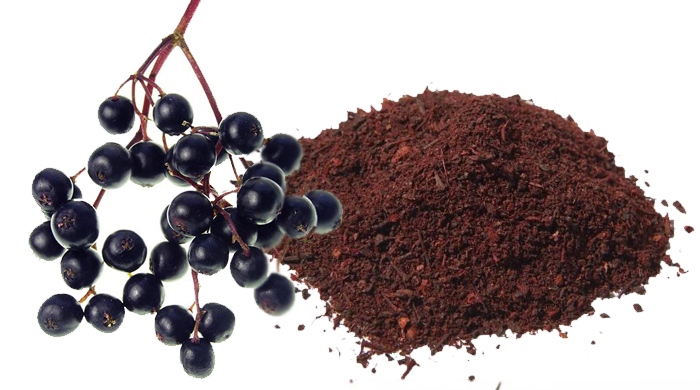 Elderberry Benefits (Sambucus Nigra) - Stop Chest Congestion