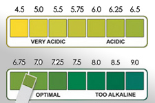 My Blood Blood Test pH Results