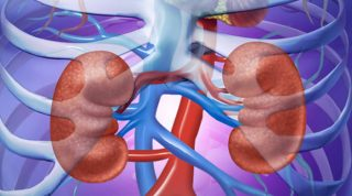 Kidney Cleanse - Cleaning The Kidneys