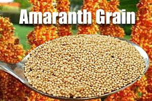Amaranth Grain - Nutritional Powerhouse A Non Gluten Alternative