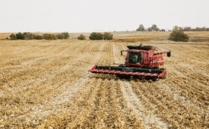 Farmers Abandoning GMO Seeds Because Conventional Seeds Are More Profitable