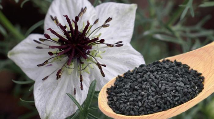 Black Seed - Nigella Sativa - Treat All Traditional Medicine