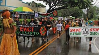 Federal Judge Rules Against Hawaii Big Island Anti-GMO Law, Maui Next