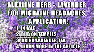 Lavender For Headaches