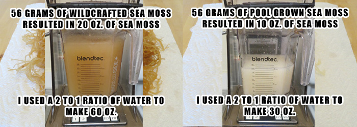 Irish Moss - Sea Moss Blending After