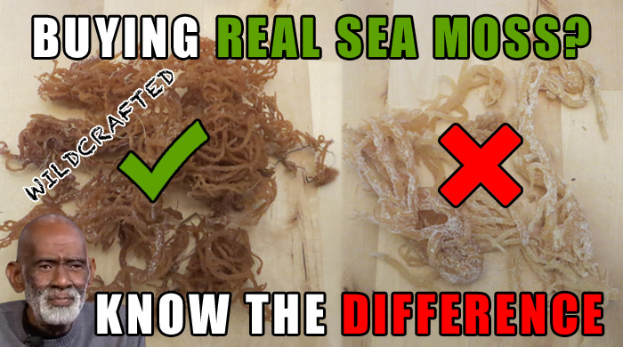 Buying Real Sea Moss Or Irish Moss - Knowing The Difference