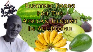 Electric Foods And Feeding The African Genome