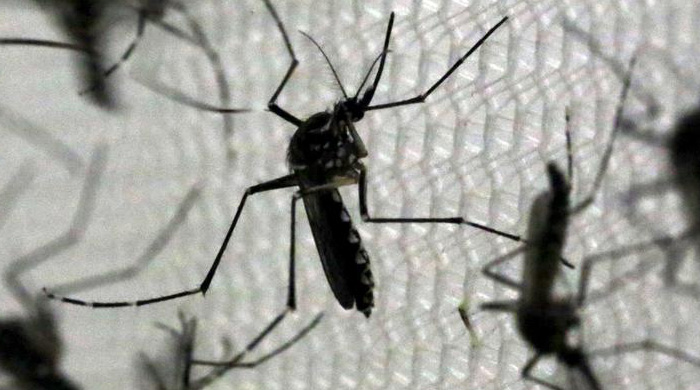 Puerto Rican Governor Stopped CDC From Using Pesticide Harmful To Pregnant Women to Combat Zika Virus
