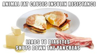 Animal Saturated Fat Shuts Down The Pancreas And Leads To Diabetes