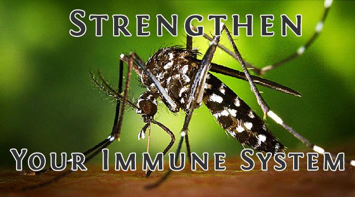 Zika Virus Damages Testes In Mice - Concern For Men