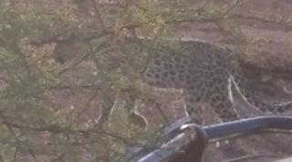 Day 1 Of The Pilanesberg Safari - Elephants, Leopards, Oh My!