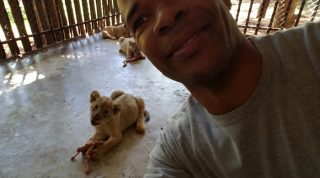 Feeding And Petting Lion Cubs And Seeing Bengal Tigers And Lions At Zoo In Africa