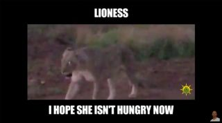 Pilanesberg Safari Day 2 - Rhinos, Impalas, Giraffes, Kudus, Lions, And Wildebeests, Oh My