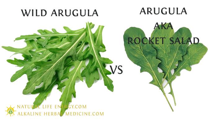 Wild Arugula Vs Rocket Salad Arugula