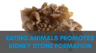 Eating Animals Promotes Kidney Stone Formation