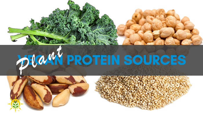 Find Your Plant Protein Sources Here